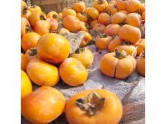 富光果业有限公司  专业种植各种水果 果树销售  莲花盖柿子-- 鄢陵县富光果业有限公司