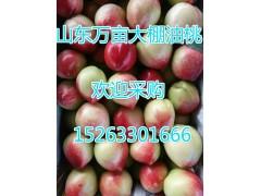油桃水果-- 山东省日照市莒县大棚油桃(个体经营)
